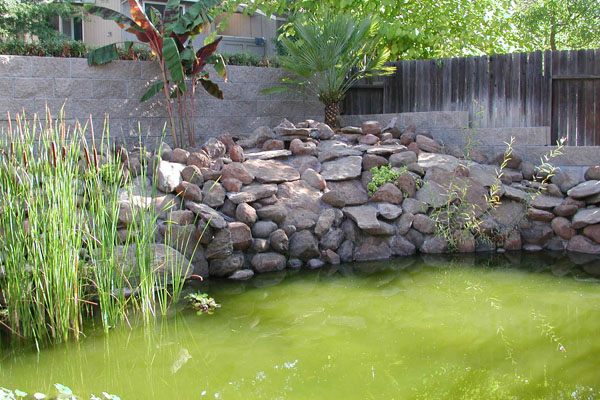 Pond gone green what can i do the fishroom for Green water in pond