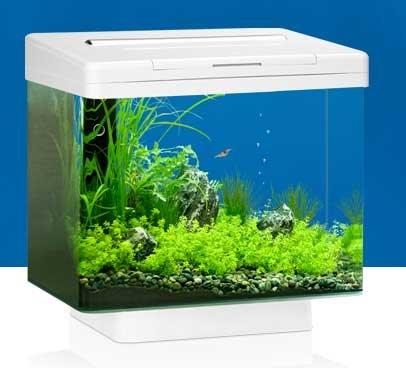 juwel vio 30 litre aquarium now only 25 the fishroom. Black Bedroom Furniture Sets. Home Design Ideas