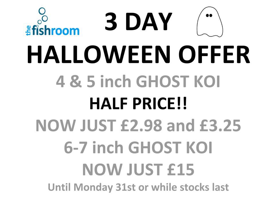 3 day halloween offer ghost koi half price the fishroom for Ghost koi carp prices