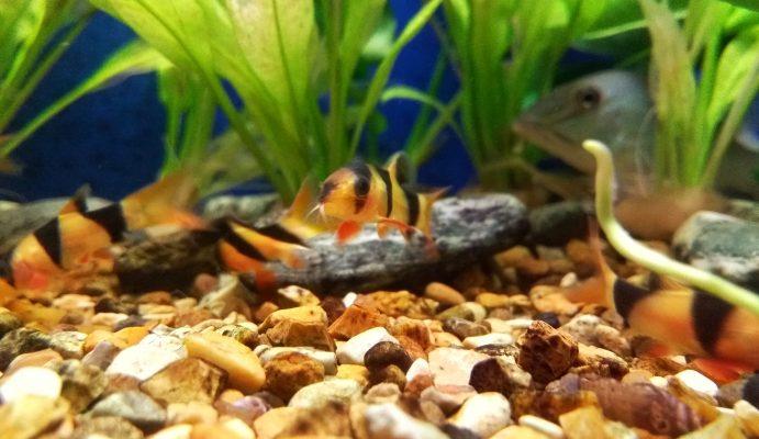 The Fish Room | Tropical & Pond Fish, Poynton, Cheshire